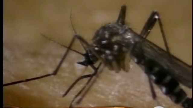 West Nile outbreak now an epidemic