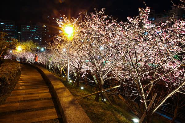 台灣的夜櫻景點也十分美麗 (圖/台北市政府)