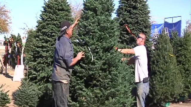 Flood Ministries Christmas tree sales to provide homes for people in need