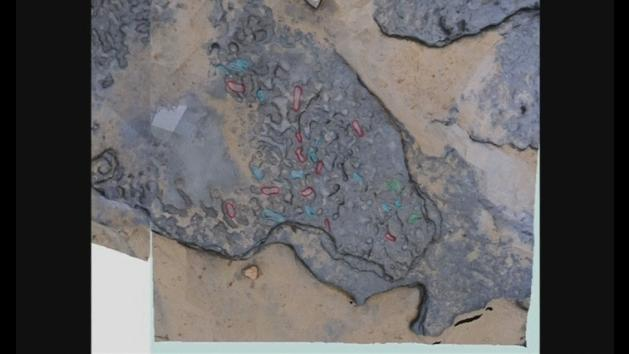 Earliest human footprints outside of Africa found in Britain
