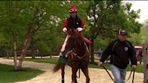 California Chrome Allowed to Race at Belmont Stakes