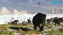 Woolly Mammoth DNA Inserted Into Elephant Cells