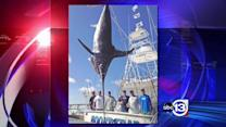 Massive swordfish caught in the Gulf of Mexico