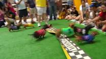 Running of the wiener dogs