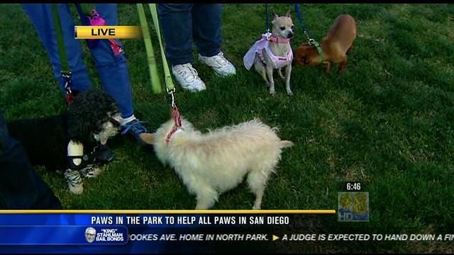 Paws in the Park helps animals in San Diego