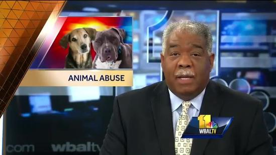 Anti-Animal Abuse Commission loses members