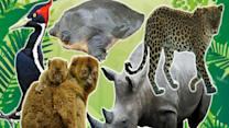 Top 5 Endangered Animals