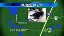 Bear struck by vehicle, killed in Lake Mary
