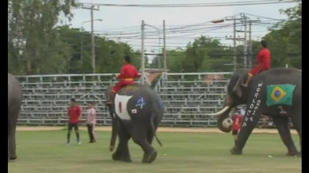 Thai elephants kick off world cup craze in warm up match