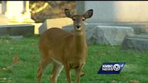 Famous Elmwood Cemetery deer found shot to death