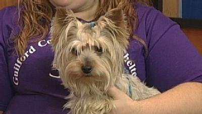 Noon Pet Of The Week: Brian