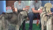 rescues in action : husky haven
