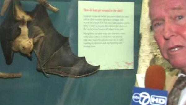 Happy Halloween! Bats cause a scream at Field Museum Chicago