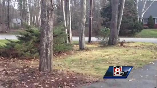 Video: Snow flakes in Kennebunk