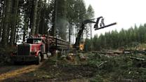 Environmentalists vow fight against new logging legislation