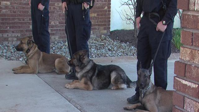 6pm: Kubo the K-9 cop laid to rest