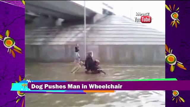Dog pushes man in wheelchair through flood