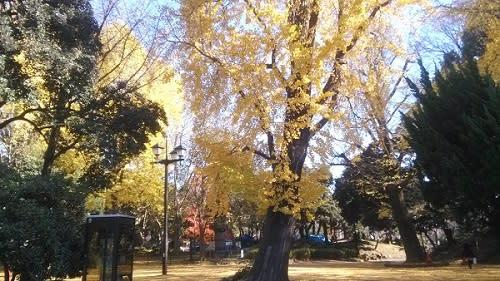上野公園-銀杏