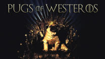 Game Of Thrones Pugs: Meet The Pugs of Westeros