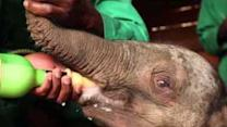 Baby Elephant 'Ndotto' Rescued After Wandering Away From Family