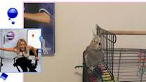 Bird Lip Syncs Nelly's 'Dilemma'
