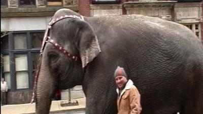 Elephants Take To Streets In Downtown Louisville
