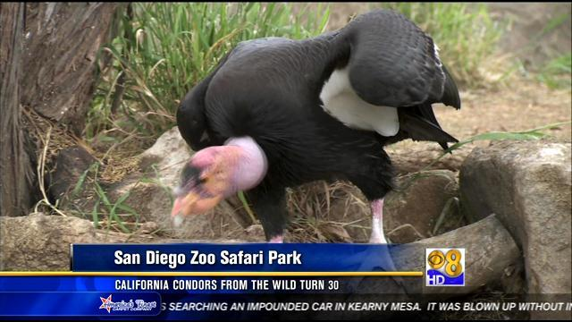 California condors from the wild turn 30