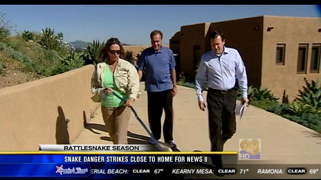 Snake danger strikes close to home for News 8