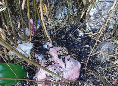 森林大火曝真相!雪山被丟260袋垃圾