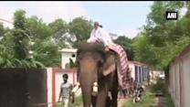 Bihar leader draws attention, takes elephant ride to work