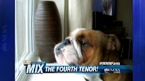 Fred the Singing Bulldog: The Fourth Tenor?