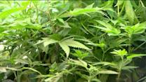 Govenor signs bill to make medical marijuana legal