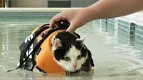 To Lose Weight, Holly the Housecat Takes a Dip