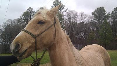 Horse Shows Up At 16 WAPT