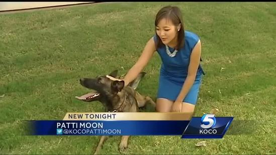 K-9 helps state agents make big dent in illegal drug sales