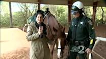 OCSO launches 'Name the Horse' contest
