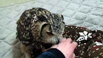 Apartment Owl Stars in Vine Account