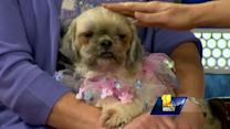 Puppy mill dog needs love, affection