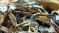 Feds Pushing To Crack Down On Foreign Seafood Labeled 'U.S. Product'