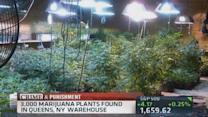 'Pot Mom' pleads guilty