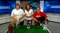 Pet Parade: Lowell Humane Society