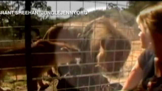 A Mother's Anguish: Family Grieves for Lion Mauling Victim