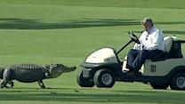 Raw: Alligator on Fairway at Zurich Classic