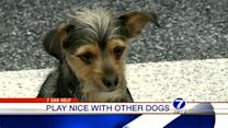 Expert shares tips on socializing your shy dog