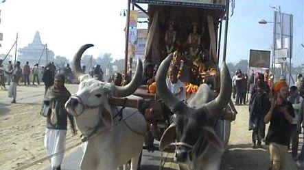 Oxen on voyage to spread teachings of Lord Krishna