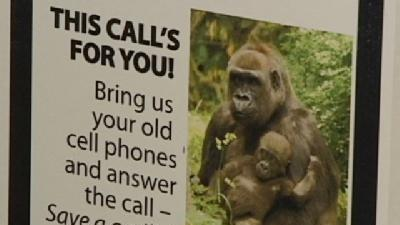 Cell Phone Recycling Helps Protect Gorillas