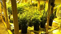 Police: Pot-growing operation uncovered at home