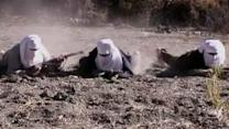 Reported drop in Taliban attacks in Afghanistan incorrect