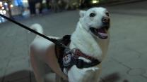 How shelter dogs are helping U.S. veterans battle PTSD