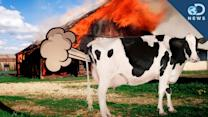 Cow Farts Blow Up A Barn! - Discovery News